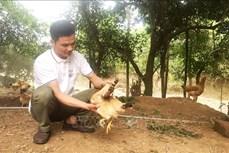 Anh Nguyễn Văn Nhị quyết chí làm giàu trên vùng đồi cằn khô