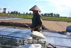 Vực dậy nghề làm muối ở huyện Giao Thủy