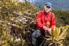 Phát hiện tại Colombia loài cây mới thuộc họ Cúc có khả năng giữ nước