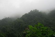 Quảng Nam ra mắt lực lượng bảo vệ rừng chuyên trách kết hợp du lịch sinh thái