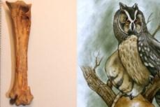 Phát hiện hóa thạch chim cú khổng lồ sống cách đây 40.000 năm tại Ecuador