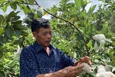 Gia Lai: Cựu chiến binh làm giàu với mô hình vườn đa cây