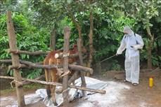 Kon Tum tập trung xử lý dịch bệnh trên đàn gia súc