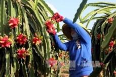 Cơ cấu lại nông nghiệp: Gắn với chế biến, thị trường