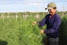 Ninh Thuận đa dạng hóa cây trồng thích ứng với điều kiện thời tiết