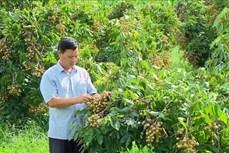 Mộc Châu phát triển các sản phẩm nông sản chủ lực theo chuỗi giá trị