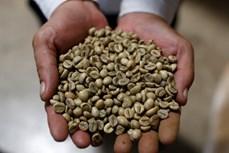 Việt Nam trở thành nhà cung cấp cà phê lớn nhất của Nhật Bản do dịch COVID-19