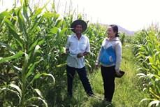 Hiệu quả từ chuyển đổi cây trồng kết hợp nuôi trồng thuỷ sản ở Bình Thuận