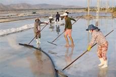 Đổi mới sản xuất và có chiến lược phát triển bền vững nghề muối ở Ninh Thuận