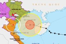 Thời tiết ngày 14/10/2020: Bão số 7 đi vào đất liền các tỉnh từ Thái Bình đến Nghệ An và suy yếu dần thành áp thấp nhiệt đới