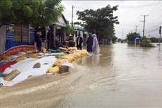 Ninh Thuận: Mưa lớn gây ngập lụt tại nhiều vùng trũng thấp