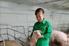 """Gương """"Nông dân Việt Nam xuất sắc năm 2020"""": Nữ tỷ phú nuôi lợn ở tỉnh Vĩnh Phúc"""