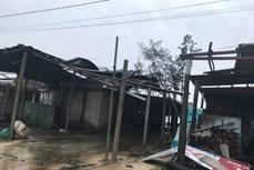 Bão số 13: Quảng Trị có 6 người bị thương khi chằng chống nhà cửa, gần 100 nhà bị tốc mái