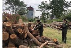 Cao Bằng tăng cường công tác quản lý, bảo vệ rừng
