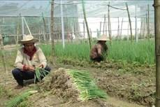 Trà Vinh hỗ trợ đồng bào dân tộc thiểu số phát triển sản xuất