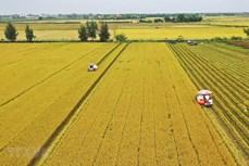 Chuyển mục đích sử dụng đất trồng lúa ba tỉnh Long An, Hải Dương, Thái Nguyên