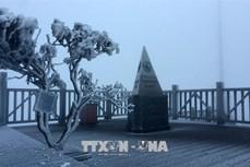 Sương muối lại phủ trắng đỉnh Fansipan, Lào Cai chủ động các biện pháp ứng phó
