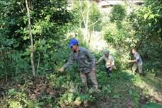 Chi trả dịch vụ môi trường gắn với bảo vệ và phát triển rừng ở Mường Tè
