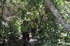 Phú Yên chấn chỉnh bất cập trong công tác quản lý bảo vệ rừng, đất rừng