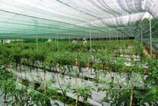 Quy hoạch vùng sản xuất nông nghiệp ứng dụng công nghệ cao ở Ninh Thuận