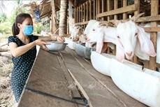 Đại hội XIII của Đảng: Xây dựng chuỗi giá trị các sản phẩm nông nghiệp chủ lực