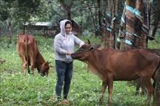 Bình Phước tập trung nguồn lực giảm 1.000 hộ nghèo dân tộc thiểu số