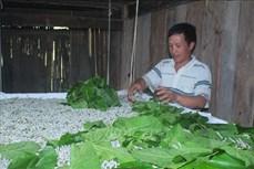 Cao Bằng: Khởi sắc trên quê hương nông thôn mới