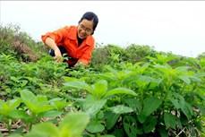Cô gái trẻ Bùi Thị Duyên khởi nghiệp từ ruộng hoang