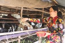 Đổi thay ở ấp Đường Đào của đồng bào dân tộc Khmer