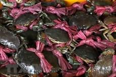 Hướng đi mới cho sản phẩm truyền thống ở Cà Mau