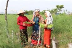 Ninh Thuận phát huy vai trò người có uy tín trong vùng đồng bào dân tộc thiểu số
