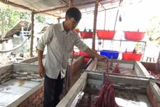 Anh Châu Văn Hồng khởi nghiệp thành công từ nghề nuôi lươn trên vùng kiểm soát lũ