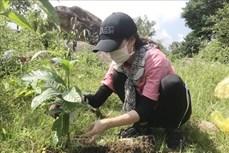 Đắk Lắk chuyển gần 7.900 ha đất lúa kém hiệu quả sang cây trồng năng suất cao