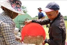 Đắk Nông nâng cao đời sống vật chất, tinh thần đồng bào dân tộc thiểu số