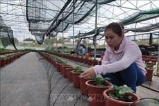 Cao Bằng hướng tới sản xuất nông nghiệp công nghệ cao