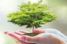 Bảo vệ môi trường: Sáng kiến độc đáo nhằm biến chất thải của con người thành năng lượng