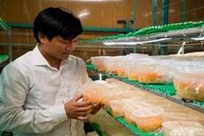 Anh Nguyễn Văn Tuấn làm giàu từ mô hình sản xuất nấm Đông trùng hạ thảo quy mô công nghiệp