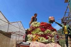 Nâng cao giá trị thương mại của sản phẩm hoa hồng Lạc Dương