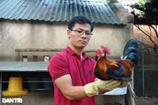 Thanh Hóa: Tăng thu nhập từ mô hình nuôi gà rừng an toàn