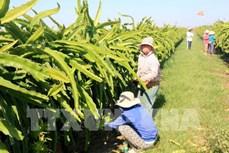 Bình Thuận - điểm sáng về nông nghiệp, nông dân, nông thôn