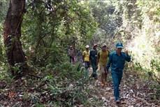 Đắk Nông tiếp tục đặt mục tiêu nâng cao độ che phủ rừng lên 42%