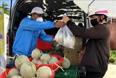 Dịch COVID-19: Hỗ trợ tiêu thụ dưa lưới cho nông dân Quảng Ngãi