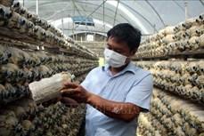 Anh Lê Đình Trúc làm giàu nhờ mô hình trồng nấm an toàn