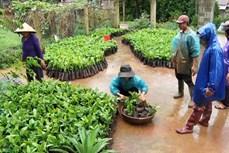 Quảng Trị: Tái canh cây cà phê theo hướng sản xuất hữu cơ