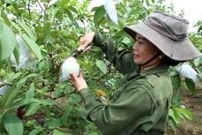 统计总局局长:第四季度越南经济增长势头仍将延续