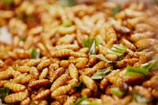 越南昆虫食品获准出口欧盟