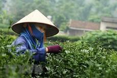 前2个月茶叶出口额猛增