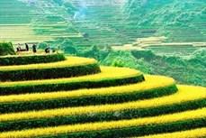 第十一届越南国际摄影大赛正式启动