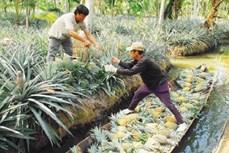坚江省注重稀有动植物基因保护