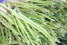 Tăng giá trị cho sản phẩm đặc thù măng tây xanh Ninh Thuận